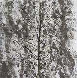 Ash by Claire Meharg, Drawing, Frottage and walnut ink