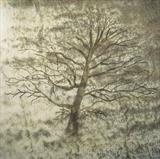 Beech by Claire Meharg, Drawing, Frottage and walnut ink