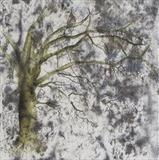 Oak by Claire Meharg, Drawing, Frottage and walnut ink