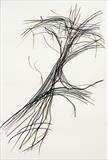 Tree Movement by Claire Meharg, Drawing, Charcoal and pencil on pergamenata